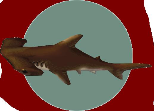 Hammerhead shark png