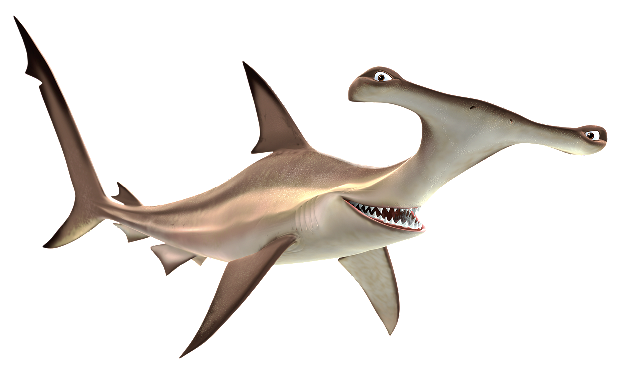 Winghead shark eyes