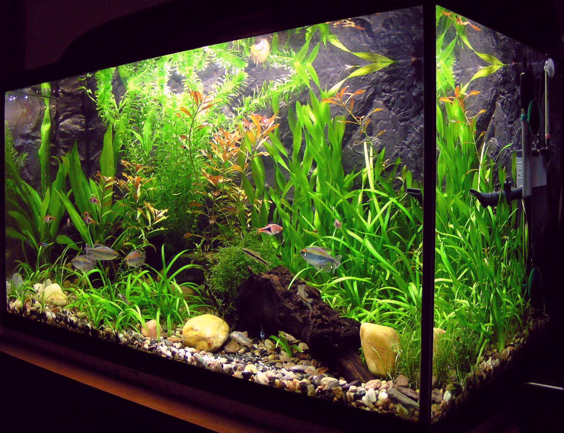 Рыбки для аквариум в домашних условиях 80