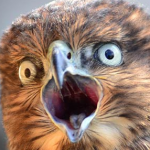 LucidPigeons's avatar