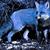 MidnightFox1943