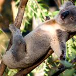 KoalaKhaos/sandbox