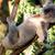 KoalaKhaos