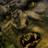 Avatar de Wolfimbul