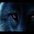 Hybridwolf77