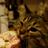 Downfur's avatar