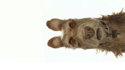 Wes Anderson Announces New Stop-Motion Film 'Isle of Dogs'