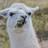 Thellamaprincess's avatar