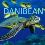 Danibean