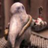 Jedion357's avatar