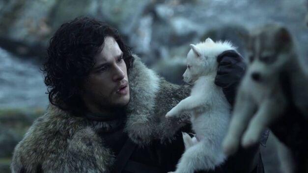 Game of Thrones Direwolf