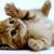 KittyKat1025