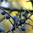 Amilanthior Blackthorn's avatar
