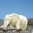 Аватар Белый Слон