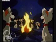 Pups Camp Fire