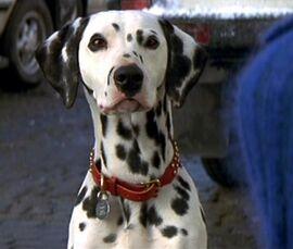 DalmatianLiveAction