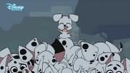 Baby dalmatian joyful
