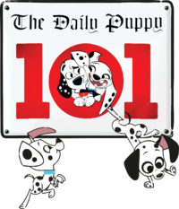 TheDailyPuppy logo