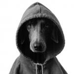 Noodlecoon/Ricky the Ninja Wisp