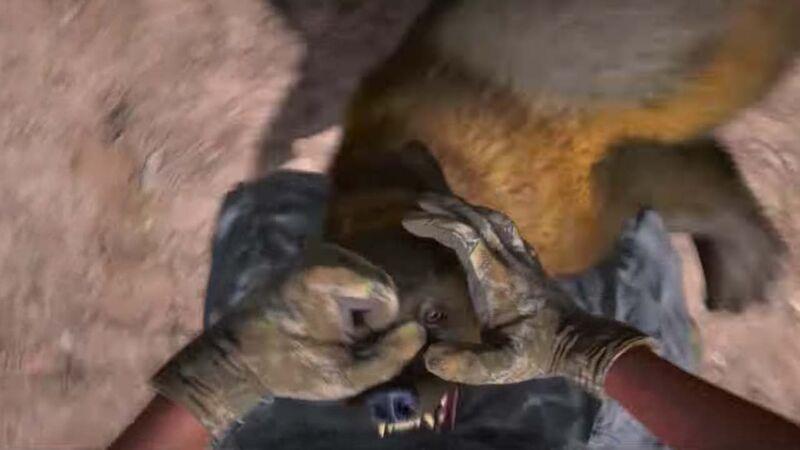 Far Cry 5 animal attack