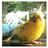 Smellie101's avatar