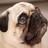 Pugpo's avatar