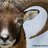 Argali1's avatar