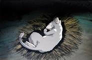 Rakashun sleeping
