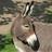 Porfirion's avatar