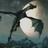 MyaDaMouse's avatar