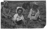 Sugar beet workers, Sugar City, Colorado