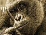 Harambe the eunuch gorilla lives (TL)