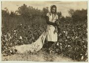 No Known Restrictions Picking Cotton by Lewis W. Hine, 1916 (LOC) (491307954)