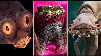 Most Amazing Electron Microscope Images