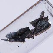Strontium (38 Sr)