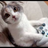 Gamercat123's avatar
