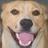 Gnostic's avatar
