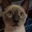 Peachdapple1414's avatar