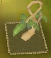 Calquat tree.png