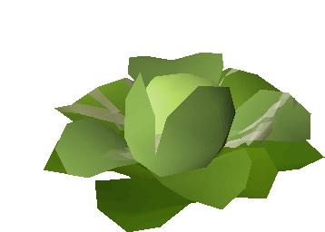 File:Sacred cabbage.png