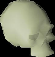 Small fossilised skull detail