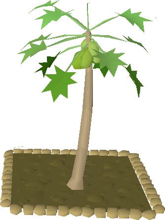 Papaya Tree Old School Runescape Wiki Fandom Powered By Wikia