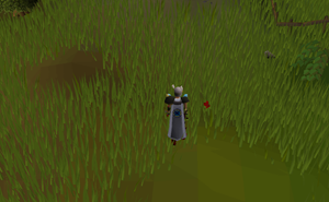 Hot cold clue - SW of Falconer
