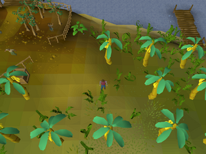 Hot cold clue - Musa Point