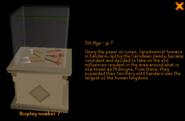 Varrock Museum display 7