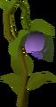 Strange plant.png