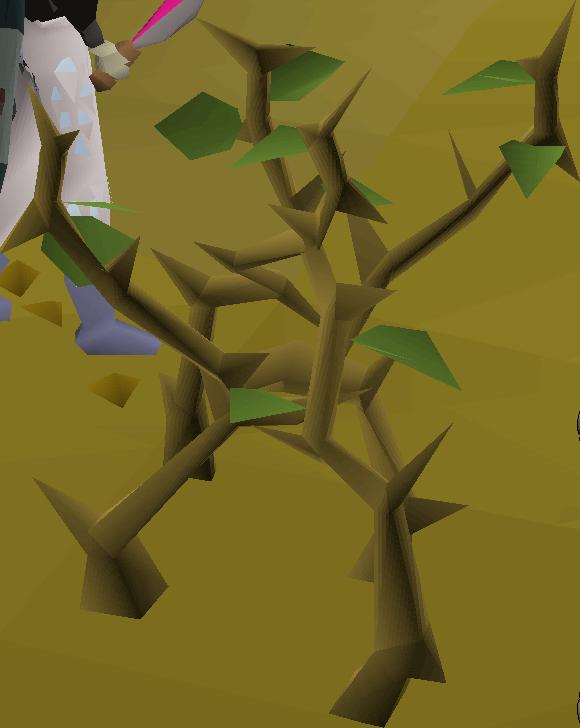 Medium Jungle | Old School RuneScape Wiki | FANDOM powered