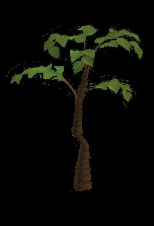 File:Jungle tree.png