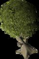 Mature juniper tree.png