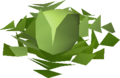 Prickly cabbage.png